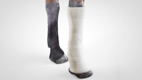 vet-horse-gel-dressing-5